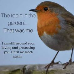 Bird quotes family 23 ideas for 2019 Miss You Mom, Mom And Dad, Bird Quotes, Me Quotes, Quotes About Birds, Qoutes, Family Quotes, After Life, We Meet Again
