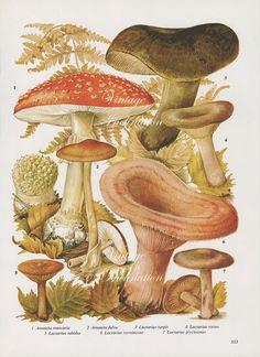 Vintage Antique MUSHROOMS illustration book by VintageInclination, $12.98