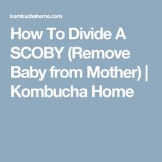How To Divide A SCOBY (Remove Baby from Mother) | Kombucha Home