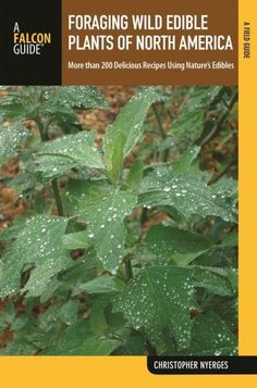 Falcon Guide Foraging Wild Edible Plants of North America: More Than 150 Delicious Recipes Using Nature's Edibles