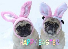Pug Bunnies Happy Easter Pinterest Board Cover