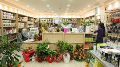 Εγκαίνια Χρωματοπωλείο ΚαλαμαριάςTetralux Stores Plants, Plant, Planets
