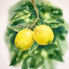 Лимоны в смешанной технике. #акварель #watercolor #botany #botanical_watercolors #kalachevaschool #art
