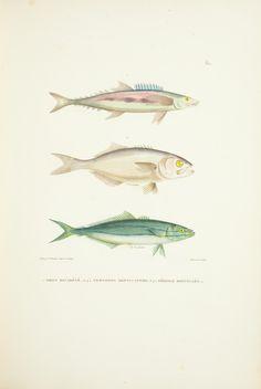[t.3] (1824) [Atlas] [Incomplete] - Voyage autour du monde - Biodiversity Heritage Library