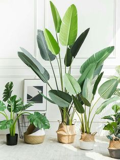 These beautiful plants are keeping away allergies and mould from your home. #cleanair #allergies #plantsforbathroom#indoorplants #indoorgarden #plants #homedecor #housedecor #homedecorideas House Plants Decor, Plant Decor, Garden Plants, Herb Gardening, Indoor House Plants, Tall Indoor Plants, Indoor Garden, Indoor Bonsai Tree, Indoor Trees
