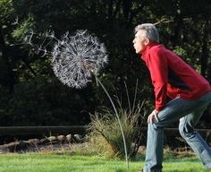 Dandelions, amazing wire sculpture artist Robin Wight. check his website out www.fantasywire.co.uk