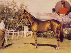 Rare colourised photo of Phar Lap