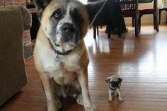 30 mini perritos llenos de ternura No te lo puedes perder  Mundo Viral