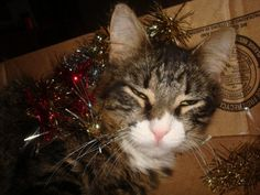 Christmas grinch! Submissive, Grinch, Cats, Christmas, Animals, Xmas, Gatos, Animales, Animaux