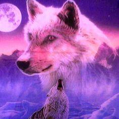 Wolfs in the wild