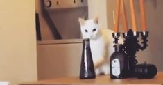 This Sly Cat Is Further Proof That There's A Whole Dark Cat World We Know Nothing About.