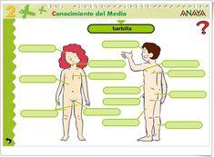 """""""Partes del cuerpo humano"""" (Actividad interactiva de Ciencias Naturales de Primaria) Family Guy, Anaya, Fictional Characters, Human Body Parts, Science Area, Interactive Activities, Teaching Resources, Note Cards, Learning"""