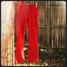 Red hot pants Rich red, low rise, boot cut pants with pintuck strip down front and back of each leg. Great condition! Dress up or down for a hot night out or a day out and about. (83% cotton, 15% Polyester, 2% Lycra) Earl Jeans Pants