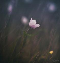flowers Simply Beautiful, Beautiful Gardens, Dandelion, Bouquet, Wallpaper, Places, Pretty, Nature, Flowers