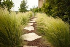 <3 <3 this pathway - you can almost hear the wind whooshing in the foliage!No matter how harsh / stark the area, grasses can really add a softness to any area.