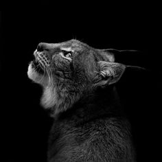 This Black and White Animal Photography by Lukas Holas is Dark #photography trendhunter.com