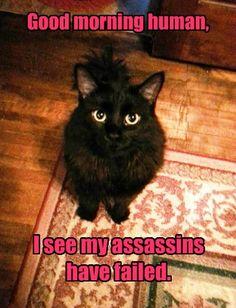 Assassins have failed