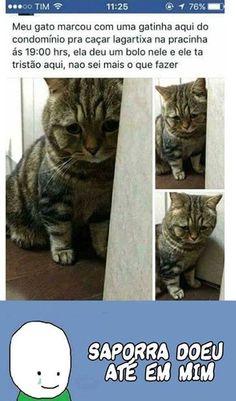 Até o gatinho tá na sofrencia