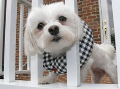 Puppy Bumpers Puppy Bumper Black and White Check 10 to 13' -- Additional details at the pin image, click it  : Dog Training and Behavior Aids