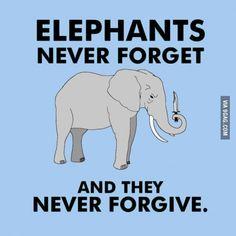 Elephants never forget, or forgive