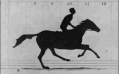 Sallie Gardner at a Gallop (1878) - The First Photographic Film Technique | 16 Game-Changing Moments In Film History