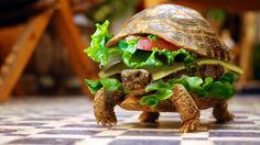 La auténtica #Burger Tortuga !!