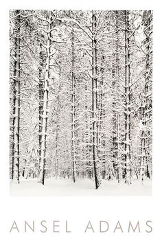 Pine Forest in the Snow Yosemite National Park Ansel Adams B&W Embossed Print #Realism