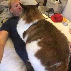 Samson The Maine Coon is the Size of a Full Grown Bob Cat ! - We Love Cats and…
