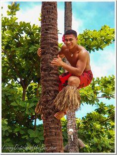 Climbing a Palm Tree at the Polynesian Cultural Center