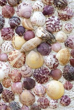 Colorful Seashell Background by Cheryl Davis on Dreamstime