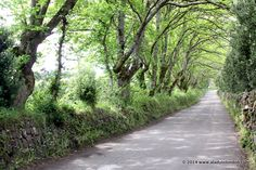 Scilly islands, England Road on St Mary's in the Isles of Scilly Ladyoflondon