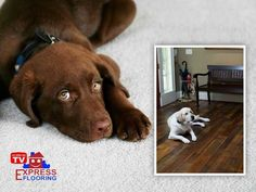 Best vacuum for pet hair on carpets. After all, no matter what type of. If the first cleaning step gets rid of the stain then that is great, if not then there is more you can do to restore your carpet. Scruffy may trash your carpet, but he still loves… Best Flooring, Types Of Flooring, Flooring Options, Love You Unconditionally, Home Estimate, Best Vacuum, Types Of Carpet, Building A New Home, Home Improvement