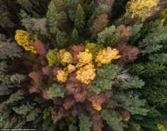 His aerial photography shows off the splendour of red, green and golden leaves as the seas...
