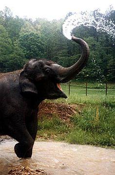 Elefante asiatico feliz!!