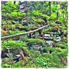 Babia Góra Trail