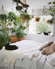 Modern Bohemian Bedrooms & Home Interior Decor Ideas: With the passage of time the demand and trend of the bohemian home decoration has been becoming the main talk of the town. Bedroom Plants Decor, House Plants Decor, Room Ideas Bedroom, Home Plants, Indoor Plant Decor, Plant Rooms, Garden Plants, Plantas Indoor, Aesthetic Room Decor