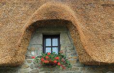 Window Box,Flowers,gardening,