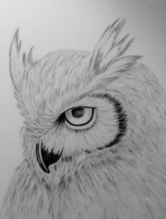 owl sketch by on DeviantArt Graphite Drawings, Pencil Art Drawings, Bird Drawings, Realistic Drawings, Art Drawings Sketches, Easy Drawings, Animal Drawings, Owl Art, Bird Art