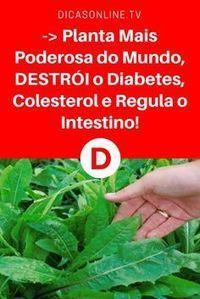 Planta para diabetes | -> Planta Mais Poderosa do Mundo, DESTRÓI o Diabetes, Colesterol e Regula o Intestino! | Você já conhecia esta planta?