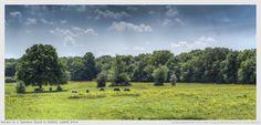 Horses in a Summer field by Nigel Lomas on 500px