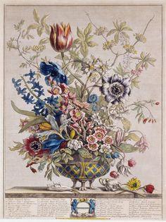 Pieter Casteels Twelve Months of Flowers