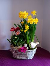 Hobbit, Spring Time, Plants, Easter Ideas, Plant, The Hobbit, Planets