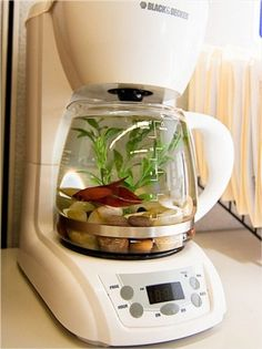 """Coffeemaker + Fish = Aquarium-  Put the """"kitsch"""" into repurposed kitchen appliances by turning an old coffeemaker into a funky new fishbowl for Goldie. Just be sure to keep it unplugged and far away from the real thing to prevent early a.m. mix-ups!"""