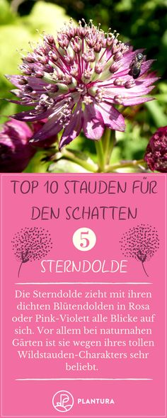 Stauden für den Schatten: Unsere Top 10 – Plantura Perennials for the shade: Our top There is always this one dark location where all plants die. We will remedy the situation and introduce you to ten perennials that also grow in the shade Cottage Garden Design, Garden Landscape Design, Diy Garden Projects, Diy Garden Decor, Balcony Plants, Garden Plants, Hedging Plants, Garden Types, Sombre