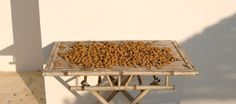 Almonds from the garden drying in the late afternoon's sun.