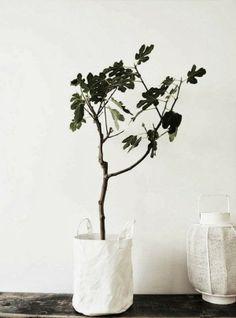 fabric pot plant