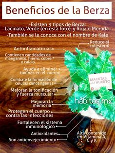 ¡Beneficios de la berza!