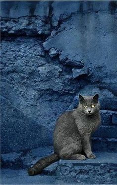 Beautiful contrast between the grey cat and the crumbling indigo blue wall.