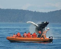 I want to see a whale in the wild someday.