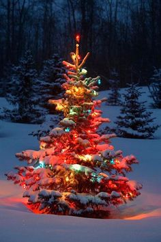 Charming outdoor christmas tree decorations you should try this year 27 Noel Christmas, Christmas Images, Country Christmas, Beautiful Christmas Pictures, Animated Christmas Pictures, Animated Christmas Tree, Winter Christmas Scenes, Christmas Tree Forest, Holiday Tree